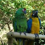08-parrots